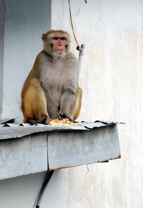 roti-and-monkey - Yogamug-ot - Tira-Pasagad | Saksak-Sinagol